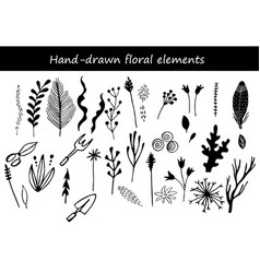 collection hand drawn flowers and plant vector image