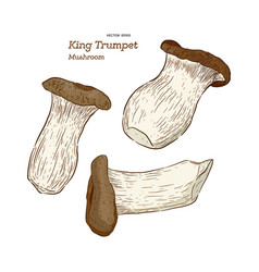 mushroom type king trumpet vector image