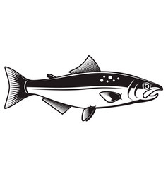 salmon fish isolated on white background vector image