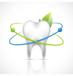 Healthy tooth realistic vector image