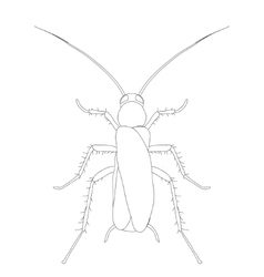 Blattella germanica cockroach Sketch of vector
