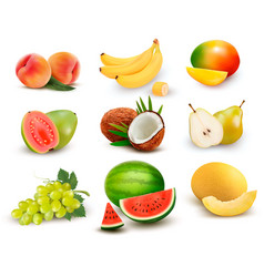 Collection of fruit and berries watermelon vector