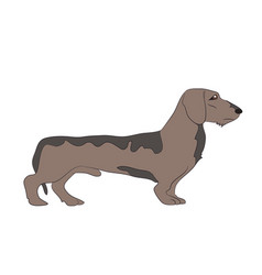 Dog in the room dachshund vector