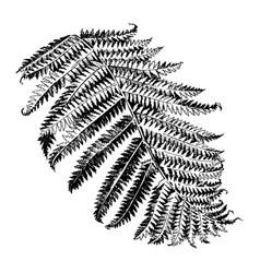 Hand drawn branch fern vector