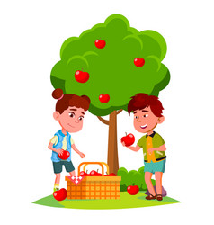 kids harvest apples in basket near apple tree vector image