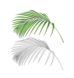 Palm leaf decoration tropical plant vector