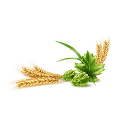 realistic hop cone with green leaf wheat vector image