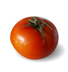 Realistic ripe red tomato with a handle cut vector