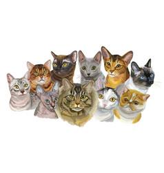 Set of cats breeds1 vector