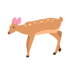 adult doe isolated in cartoon style icon vector image