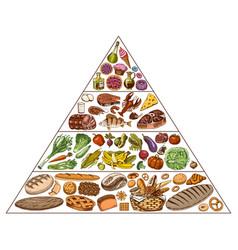 healthy food plan pyramid infographics vector image