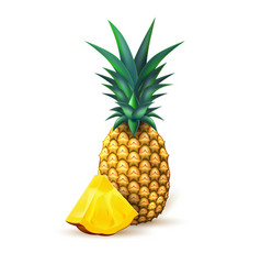 Pineapple realistic summer exotic fruit slice vector