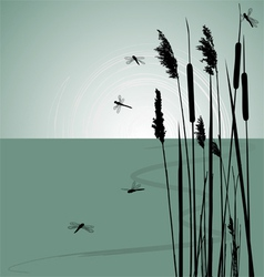 Reeds in the water and few dragonflies vector image