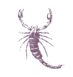 scorpion on white background vector image