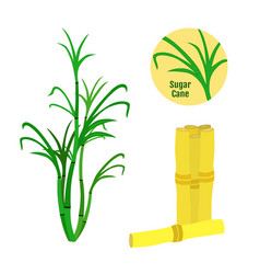 Sugar cane set flat style organic food sugarcane vector