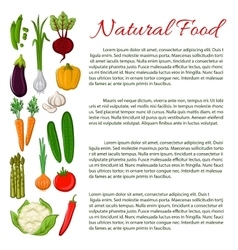 Vegan food poster with vegetables vector