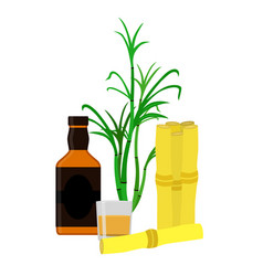 rum bottle sugar cane glass shot flat style vector image