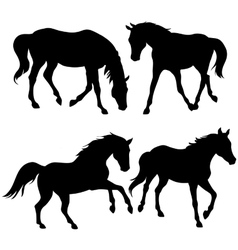 Silhouettes of horses - vector image