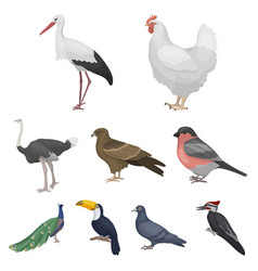 Bird set icons in cartoon style big collection of vector