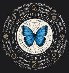 Butterfly morpho peleides with old magic symbols vector