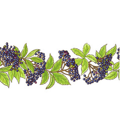 Elderberry branch pattern vector