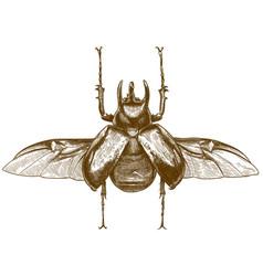 Engraving antique rhinoceros beetle vector