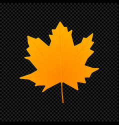 leaf isolated on dark transparent vector image vector image