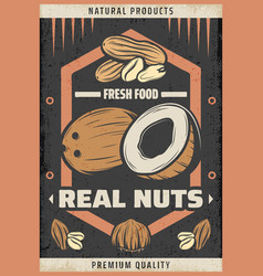 vintage colored natural fresh nuts poster vector image