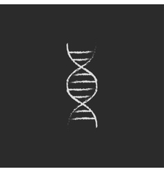 DNA icon drawn in chalk vector image