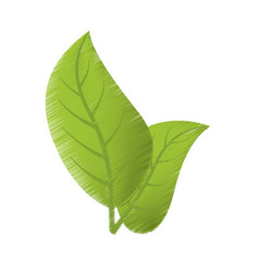 Drawing green leaves natural vector