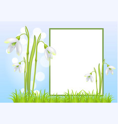 Frame for text and snowdrop galanthus bell flowers vector