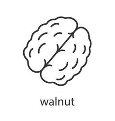 Walnut linear icon vector