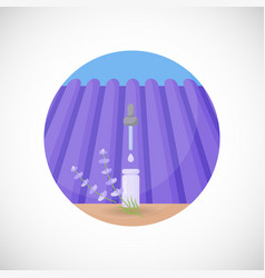 lavender essential oil flat icon vector image