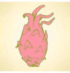 Sketch dragon fruit in vintage style vector image vector image