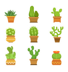 Botany decorative plants in pots cactus with vector