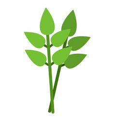 bay leafs flat icon isolated vector image