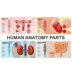 cartoon human organs composition vector image