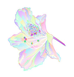 Colorful flower rhododendron mountain shrub vector
