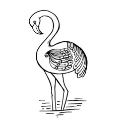 Flamingo doodle with black outline on white vector