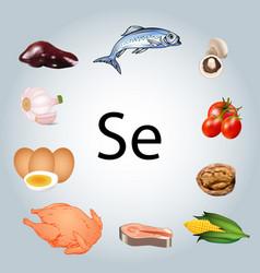 Foods rich in selenium healthy eating vector