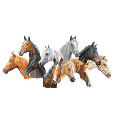 set of horses breeds3 vector image