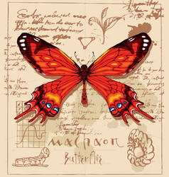Banner with drawing of a machaon butterfly vector