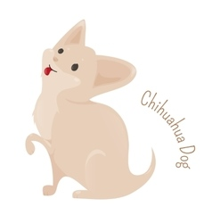 Chihuahua isolated on white background vector
