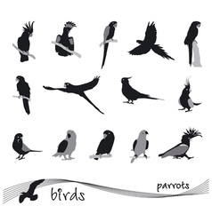 collection of silhouettes of parrots vector image