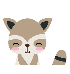 Colorful adorable and shy raccoon wild animal vector