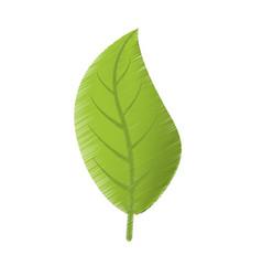 drawing green leaves natural spring vector image