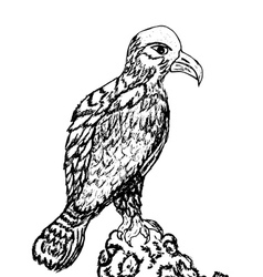 Eagle Sketch vector