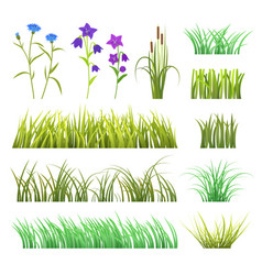 Green grass herb and flowers nature vector