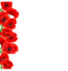greeting card poppies flowers vector image