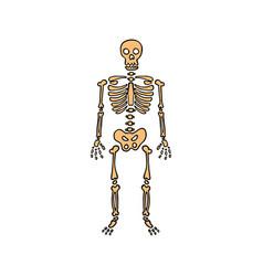 Happy halloween color icon skeleton skull vector